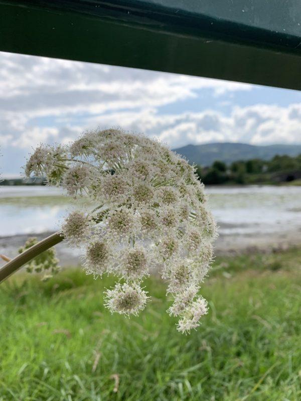 Beach flora