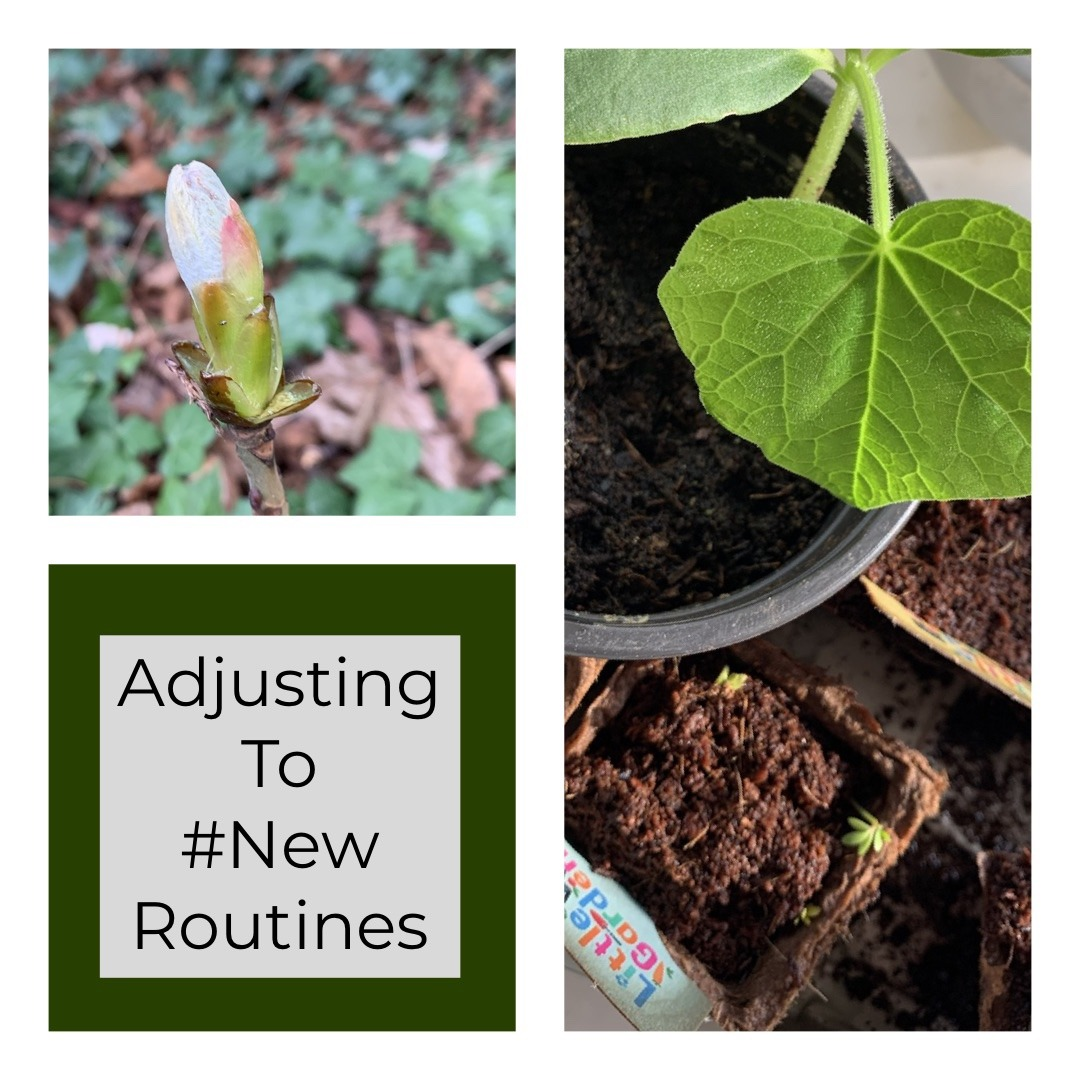 Adjusting to new routines