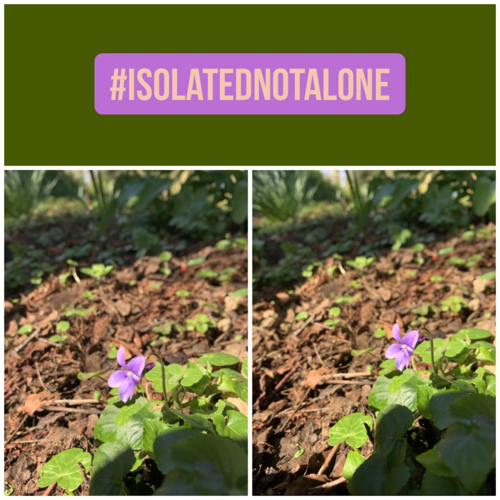 #isolatednotalone