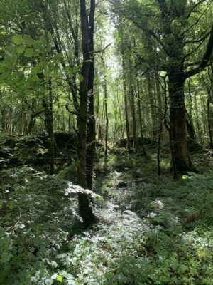 Wooded glade