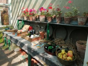 From picking to potting in the greenhouse