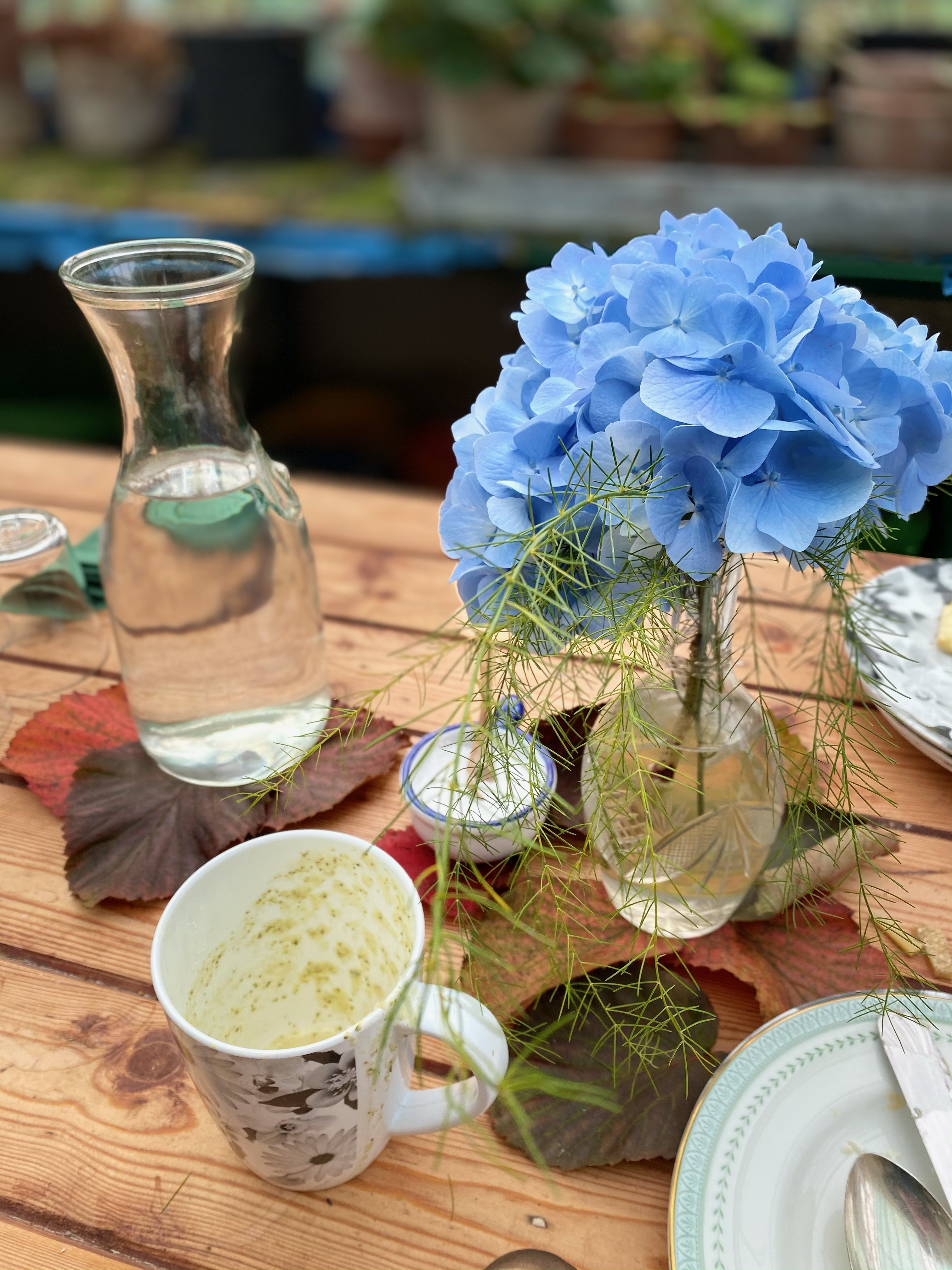 Hydrangea in the greenhouse at Hidden Huntley