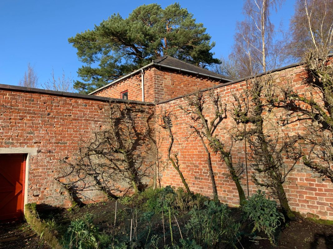 The walled garden walls